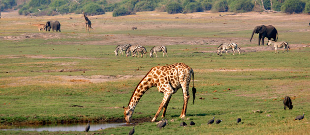 African Travel Tips For Visiting Zimbabwe